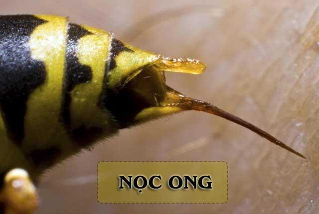 thành phần có trong nọc ong