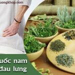 Thuốc nam chữa bệnh đau lưng