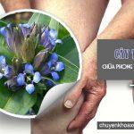 Bài thuốc chữa phong thấp bằng cây tần giao