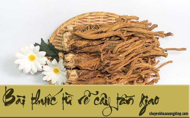 Bài thuốc chữa phong thấp bằng rễ cây tần giao