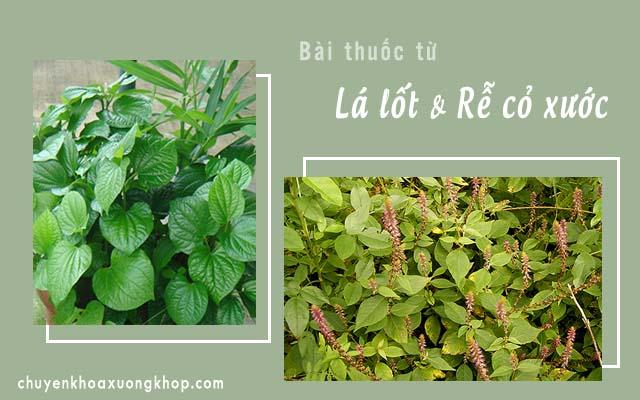 chữa bệnh Gút bằng lá lốt và rễ cỏ xước